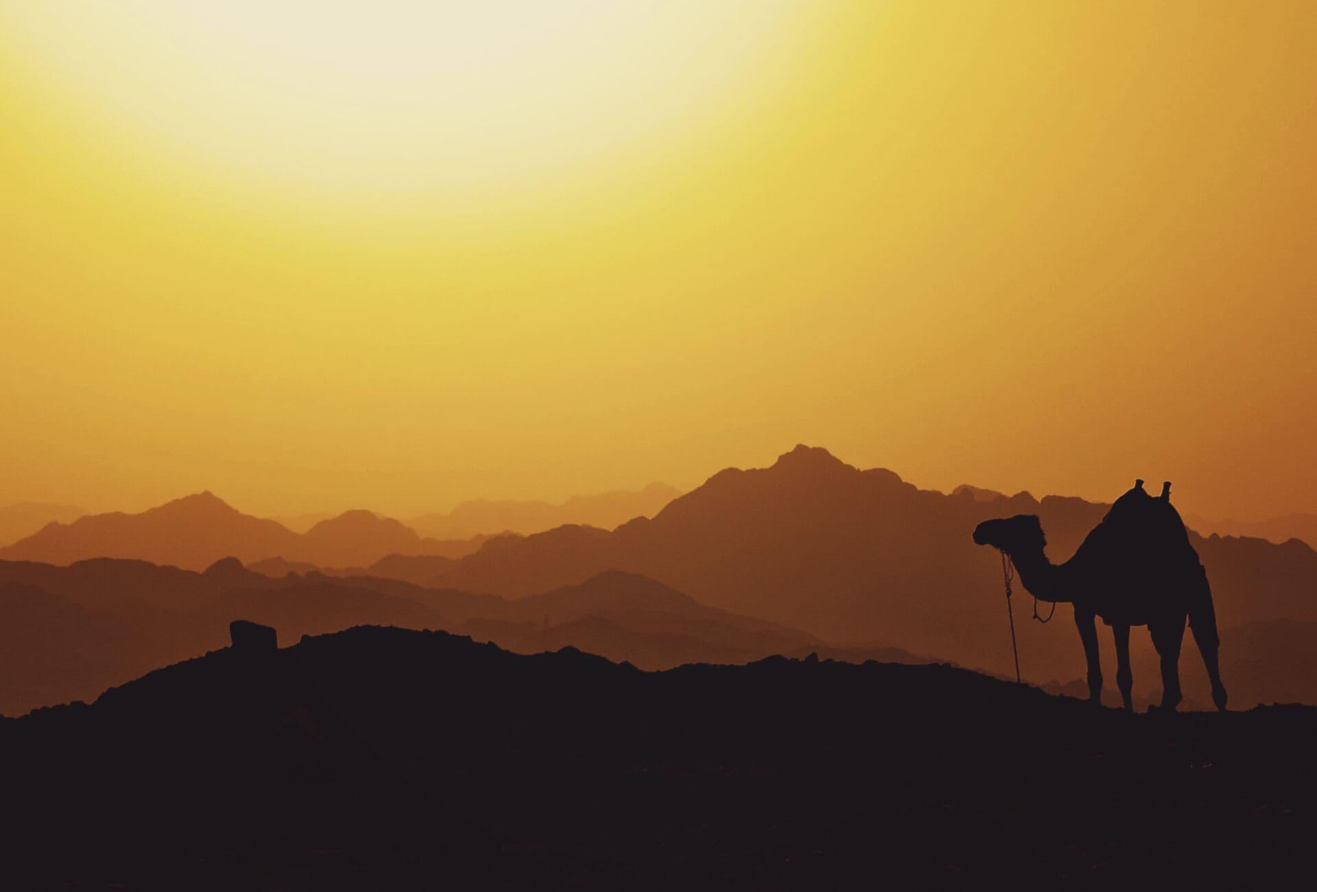 The Joseph Story: Part III
